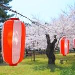 Blooming sakura and lantern — Stock Photo #72406071