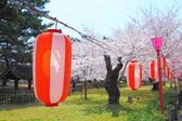 Bloeiende sakura en lantaarn — Stockfoto