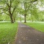 Walkway and trees — Stock Photo #57274101
