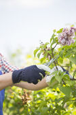 Gardener pruning branches — Stock Photo
