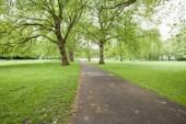 дорожка и деревья — Стоковое фото