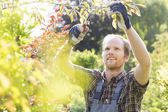 Young man cutting branch — Stock Photo