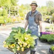 Gardener pushing wheelbarrow — Stock Photo #57286735