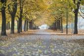 Walkway and autumn trees — Stock Photo