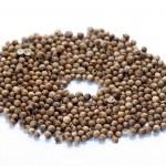 Natural  mustard seeds — Stock Photo #69081353