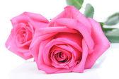 Beautiful pink roses — Stock Photo