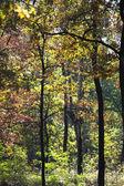Autumn trees in woods — Stock Photo