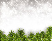 Fir christmas background. — 图库矢量图片