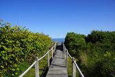 Wooden path to the ocean — Stock fotografie