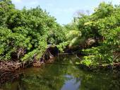 Stream covered with plants at Ahalanui Park — Stock Photo