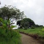 Path cut through Green overgrown grass in botanical garden — Stock Photo #61349177