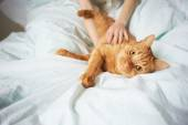 Female hands caress cat — Stock Photo
