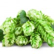 Fresh Hop — Stock Photo #54246783
