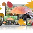 Images of mushrooms are on the screens of computer technology. — Stock Photo #54724651