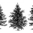 Pine trees Christmas trees realistic hand drawn vector set, is — Stock Vector #56841049