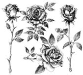 Hand drawn flower set, rose collection — Stock vektor