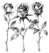 Single roses drawing set  — Stock Vector
