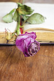 Dried rose in book — Stock Photo