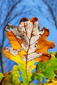 Colors of autumn — Stock Photo