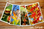 Beautiful autumn images collection — Stock Photo