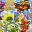 Four seasons of the year images collection — Stockfoto #56271201
