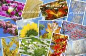 Four seasons of the year images collection — Stock Photo