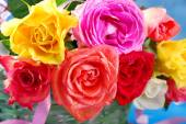 Colorful roses in wicker basket — Stock Photo