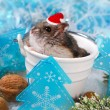 Hamster in santa hat waiting for christmas — Stock Photo #58764549