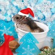 Hamster in santa hat waiting for christmas  — Stock Photo #58764563