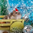 Hamster in santa hat waiting for christmas — Stock Photo #58764585