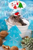 Hamster in santa hat dreaming about christmas — 图库照片
