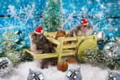 Two hamsters in santa hats waiting for christmas  — Stock Photo