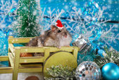 Hamster in santa hat waiting for christmas — Foto de Stock