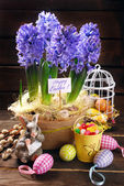 Easter decoration with fresh hyacinth flowers on wooden backgrou — Stock Photo