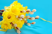 Bunch of daffodils and catkins for easter — Stock Photo