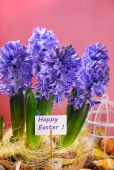 Easter decoration with fresh hyacinth flowers on pink background — Stock Photo