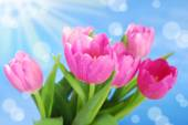 Bunch of pink tulips against blue sky — Stock Photo