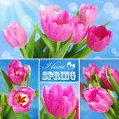 Collage with pink tulips and text — Stock Photo