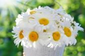 Bunch of daisies in the garden — Stock Photo