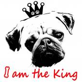 Black and white graphic style pug dog as the king — Stock Photo