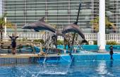 Dolphin show in the Oceanographic of Valencia in Spain. — Stock Photo