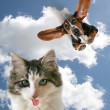 Dog flying towards little kitten — Stock Photo