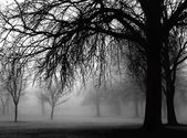 Foggy day in the park — Stock Photo