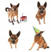Chihuahua mix collage — Stock Photo