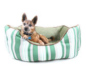 Dog laying in pet bed — Stock Photo
