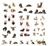 Large group of dogs — Stock Photo