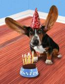 Basset hound with a piece of cake — Stock Photo