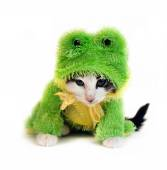 Tiny kitten in a frog costume — Foto Stock
