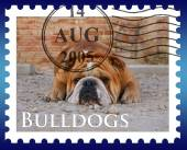 Bulldog on postmark — Foto Stock