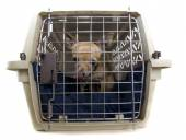 Chihuahua in small kennel — Stock Photo